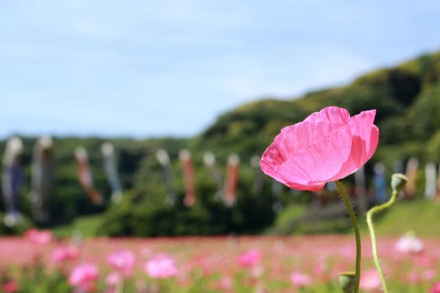【くりはま花の国】横須賀散策 part 1_f0348831_23361786.jpg