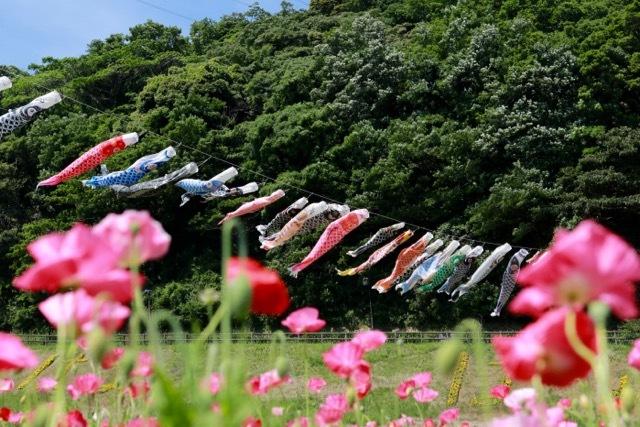 【くりはま花の国】横須賀散策 part 1_f0348831_23361790.jpg