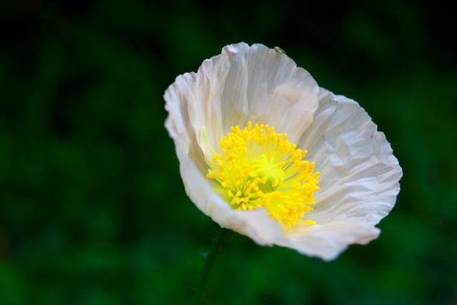 【くりはま花の国】横須賀散策 part 1_f0348831_23362172.jpg