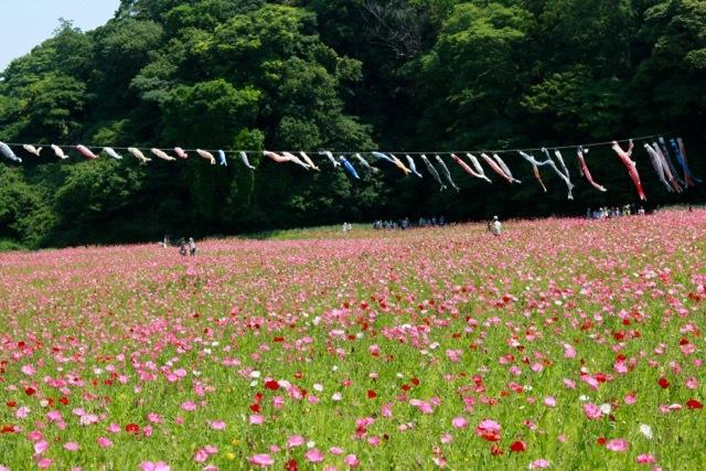 【くりはま花の国】横須賀散策 part 1_f0348831_23362195.jpg