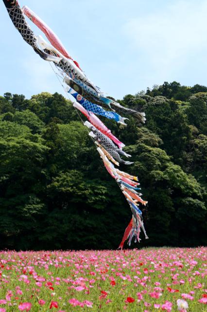 【くりはま花の国】横須賀散策 part 1_f0348831_23363245.jpg