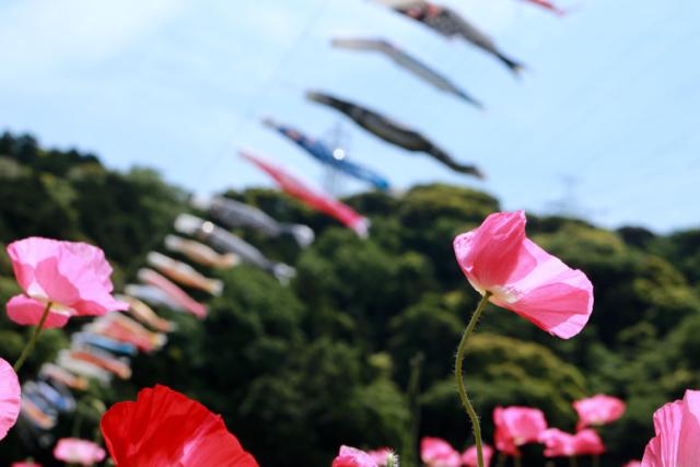 【くりはま花の国】横須賀散策 part 1_f0348831_23363459.jpg