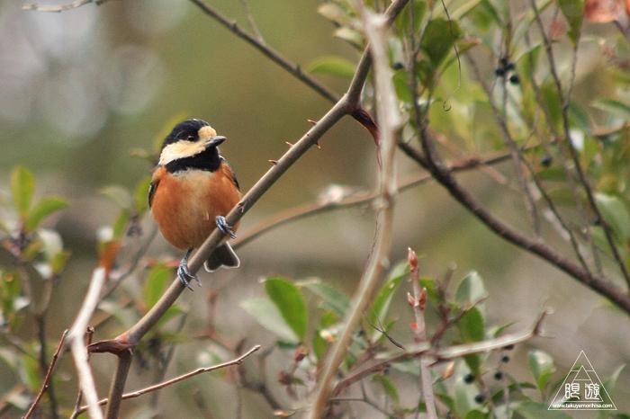 482 野呂山 ~恒例の親父と鳥撮り~_c0211532_2323512.jpg