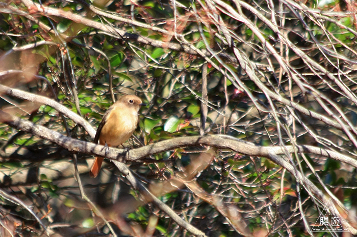 482 野呂山 ~恒例の親父と鳥撮り~_c0211532_23274130.jpg
