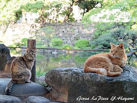 猫のいる風景 日比谷公園の二匹様_b0133053_001145.jpg