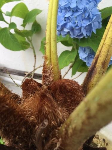 My Flying Spider-monkey Tree Fem._c0153966_15404856.jpeg
