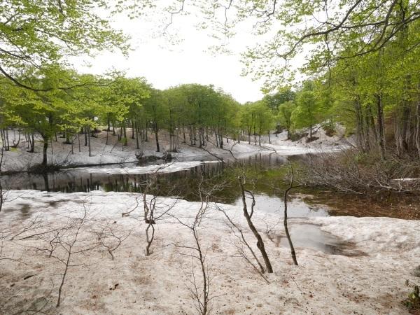 残雪とブナ林(山形県立自然博物園)_a0351368_23194470.jpg