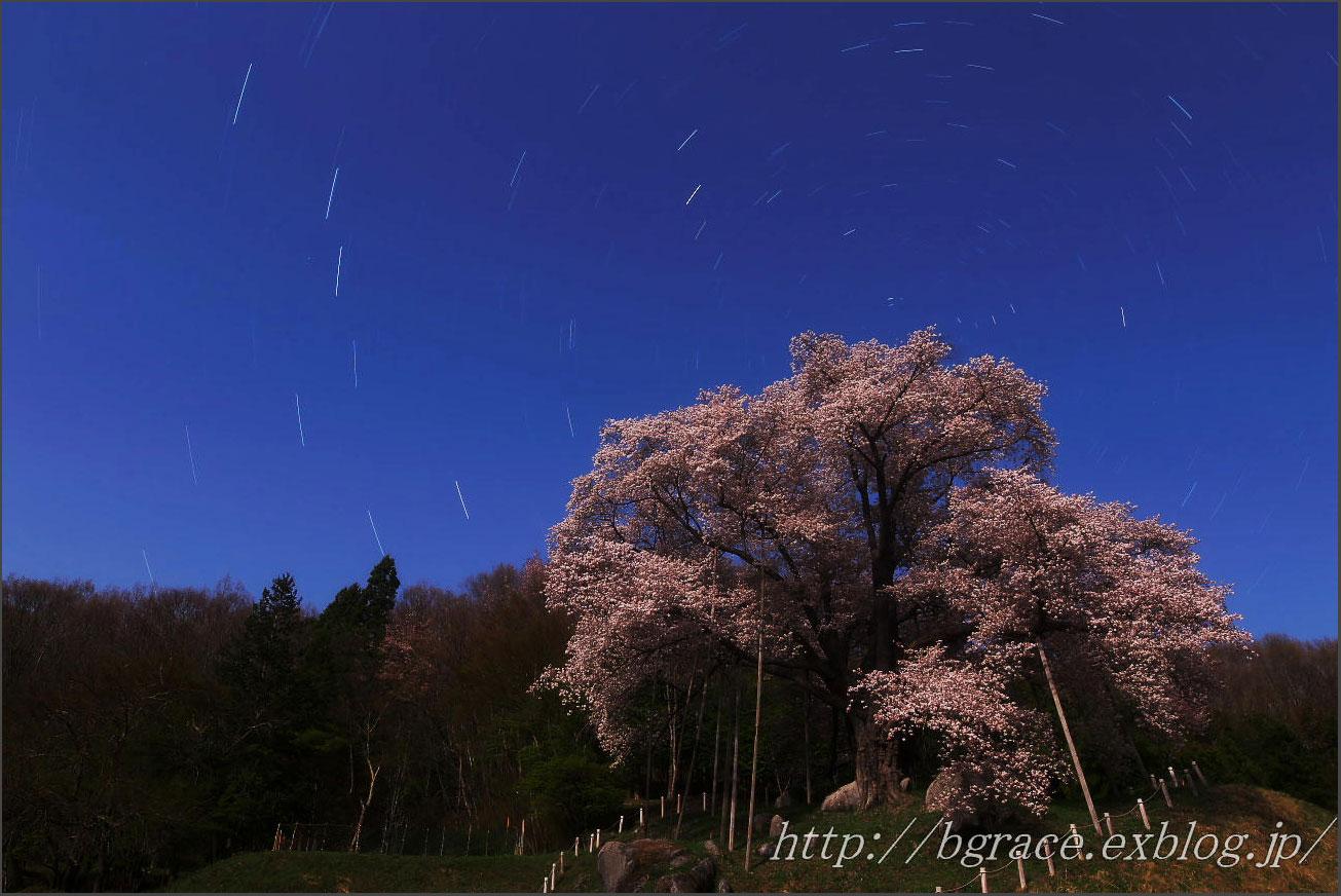 桜星景 と 北斗七星 _b0191074_23125223.jpg