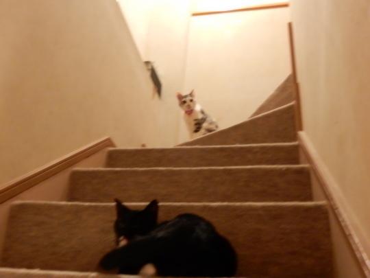 階段の闘い_e0355177_19035194.jpg