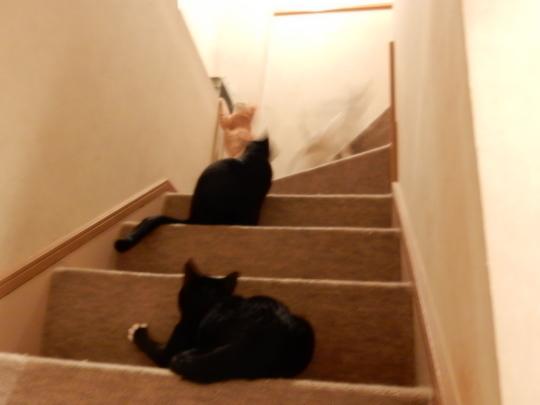 階段の闘い_e0355177_19042858.jpg