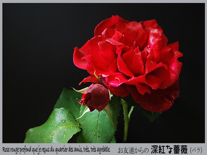 c0009981_5331336.jpg
