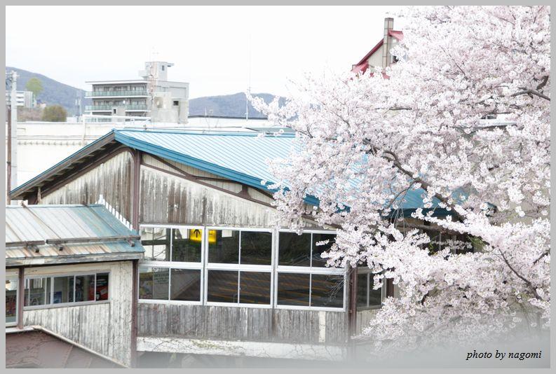 名残りの桜_e0166395_16233816.jpg