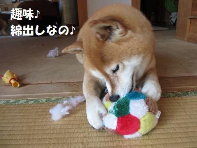 ひまちゃんの趣味_f0068501_15262893.jpg