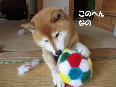 ひまちゃんの趣味_f0068501_15305920.jpg