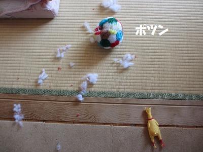 ひまちゃんの趣味_f0068501_15322789.jpg