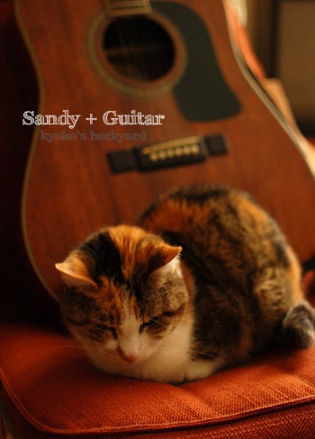 Sandy + ギター_b0253205_02251457.jpg
