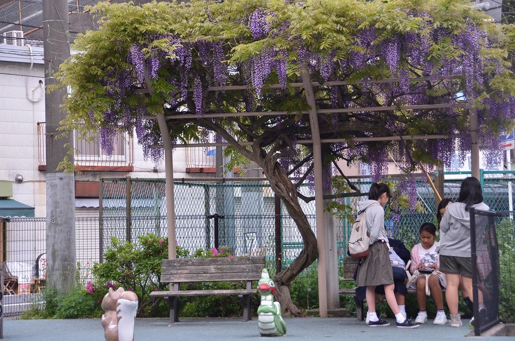 坂本から汐入へ_d0065116_19263164.jpg