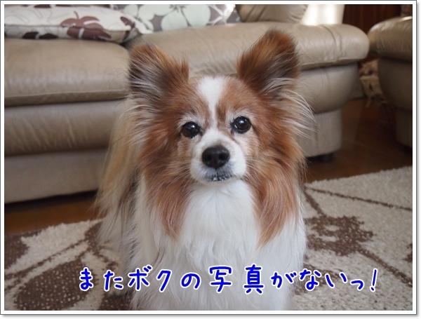 d0013149_00475279.jpg