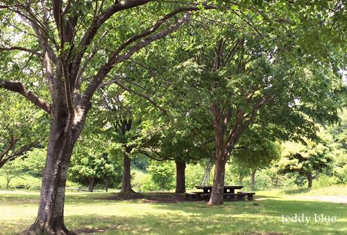 picnic in the park  公園でピクニック_e0253364_2241311.jpg