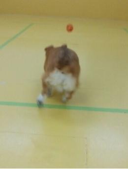 ボール遊び(*´∀`)♪_f0357682_11423829.jpeg