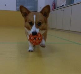ボール遊び(*´∀`)♪_f0357682_11473507.jpeg
