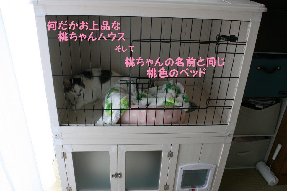桃ちゃん 新生活スタート!_f0242002_1041679.jpg