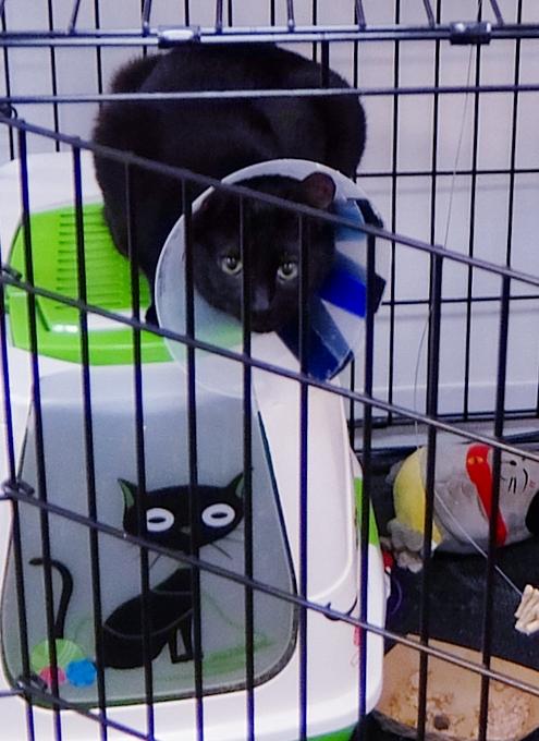 NYに登場したワンちゃん、猫ちゃんを救うブティック、『シェルター・シック』Shelter Chic_b0007805_21541786.jpg