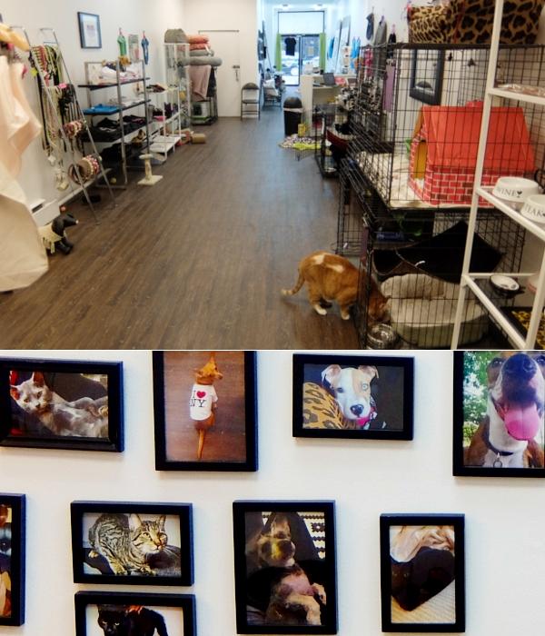 NYに登場したワンちゃん、猫ちゃんを救うブティック、『シェルター・シック』Shelter Chic_b0007805_21545188.jpg