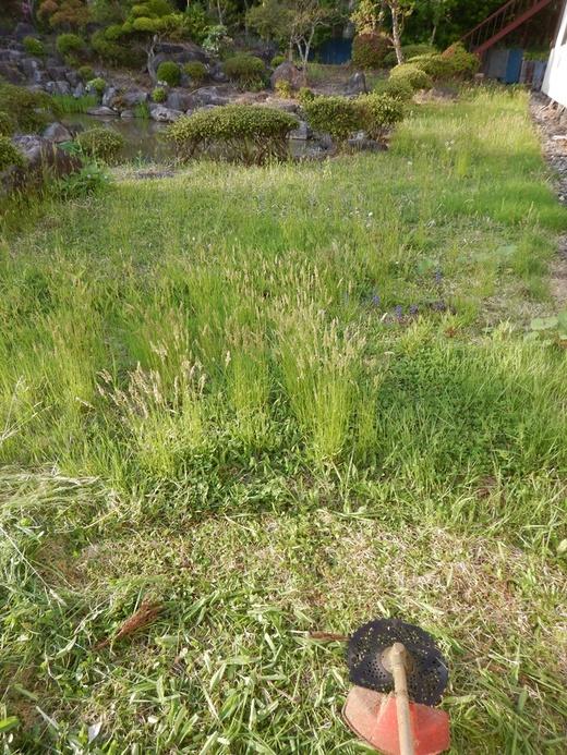 庭の草刈り_c0111229_18352940.jpg