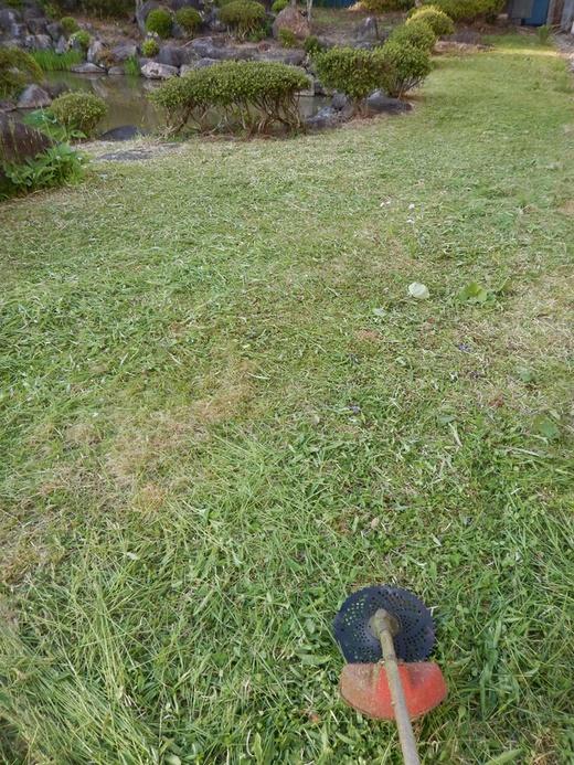 庭の草刈り_c0111229_18353528.jpg