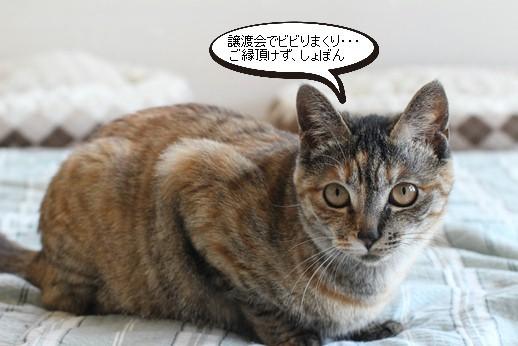 譲渡会ありがとうございましたとシニア猫さん引取り_e0151545_19174784.jpg