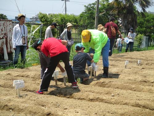 おやこ楽農くらぶ開園です!!_f0079749_20572373.jpg