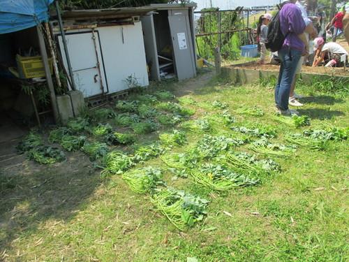 おやこ楽農くらぶ開園です!!_f0079749_2162072.jpg