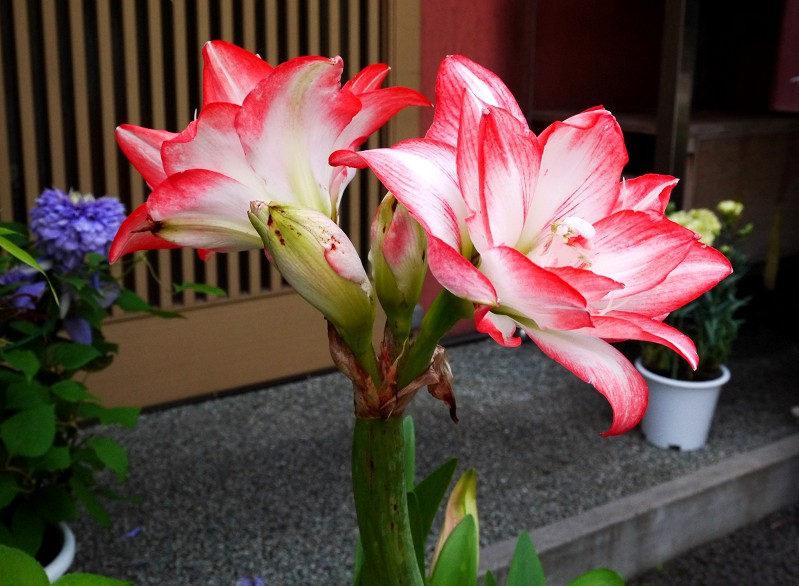 五月の花 (1)_b0093754_22501029.jpg