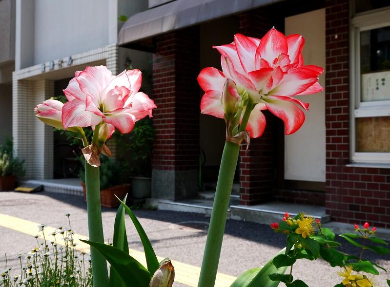 五月の花 (1)_b0093754_22503864.jpg