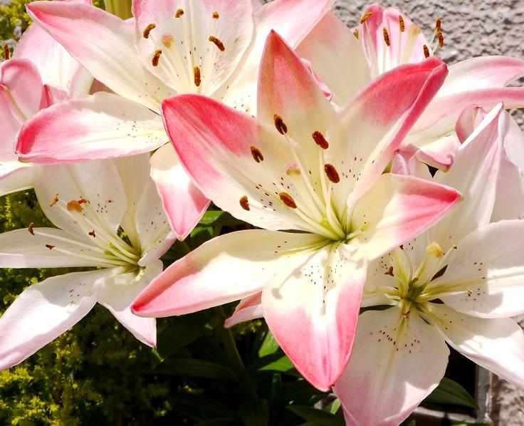 五月の花 (1)_b0093754_2251597.jpg