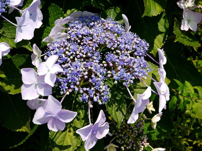 五月の花 (1)_b0093754_22534691.jpg