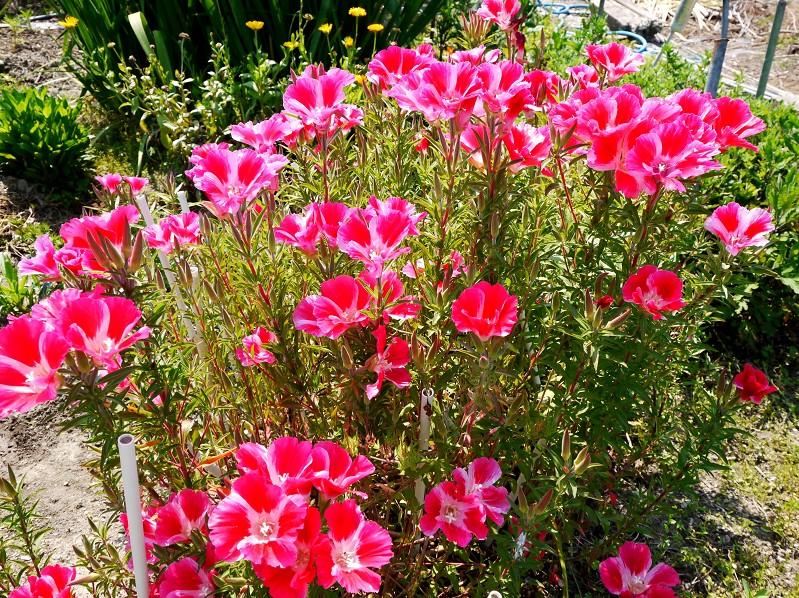 五月の花 (1)_b0093754_22553434.jpg