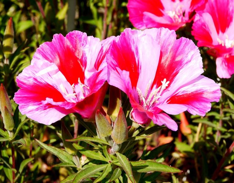 五月の花 (1)_b0093754_22554746.jpg