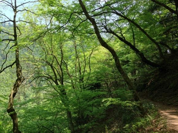 御岳山ハイキング_c0310571_22544049.jpg