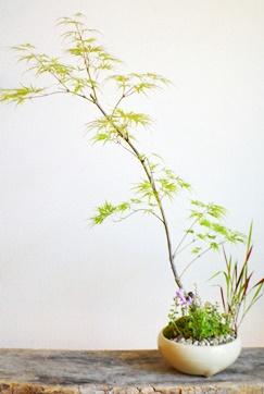モミジ盆栽ワークショップ開催_d0263815_20303310.jpg