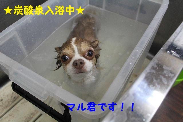 素潜り~!!_b0130018_736390.jpg