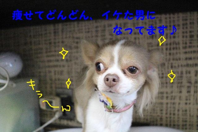 素潜り~!!_b0130018_737450.jpg