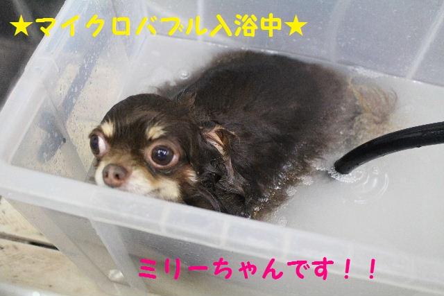 素潜り~!!_b0130018_7374790.jpg