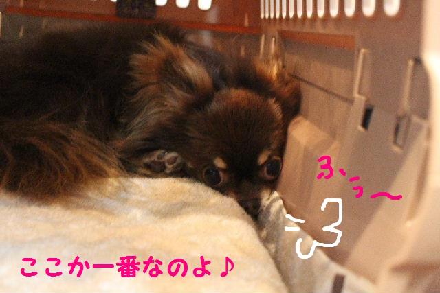 素潜り~!!_b0130018_7391099.jpg
