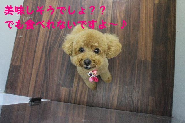 素潜り~!!_b0130018_7432026.jpg