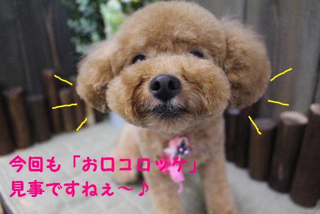 素潜り~!!_b0130018_743882.jpg