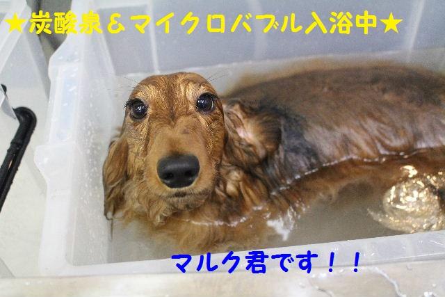 素潜り~!!_b0130018_744297.jpg