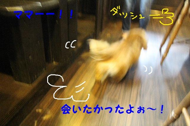 素潜り~!!_b0130018_7445172.jpg