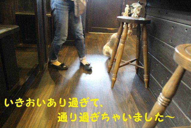 素潜り~!!_b0130018_745012.jpg